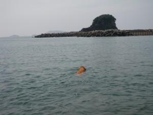 どこまでも泳ぎましゅよー